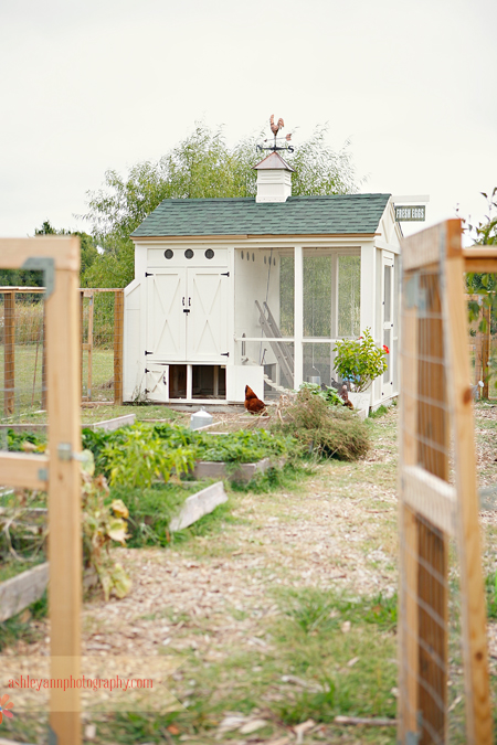 a tour of our chicken coop
