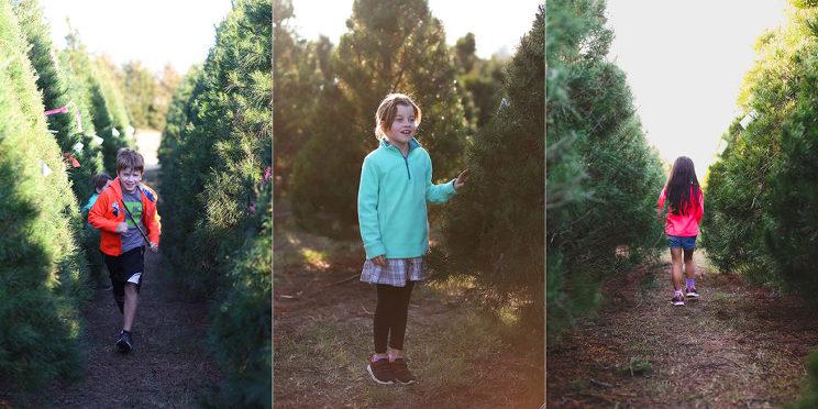 christmastree-02